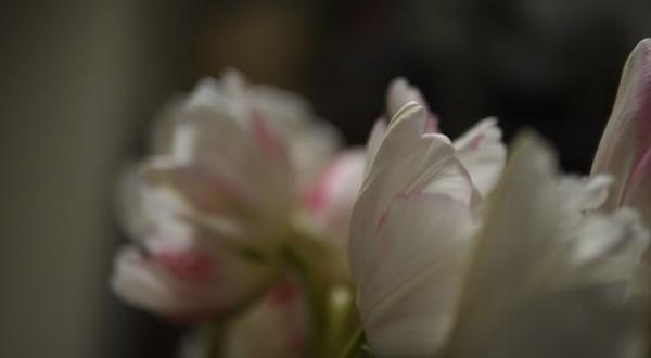 FlowersForUs1