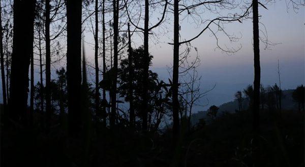 nature_symphony_mai_hua_750